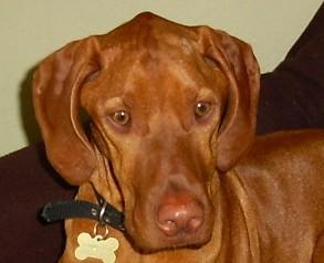 Jasper after VIP
